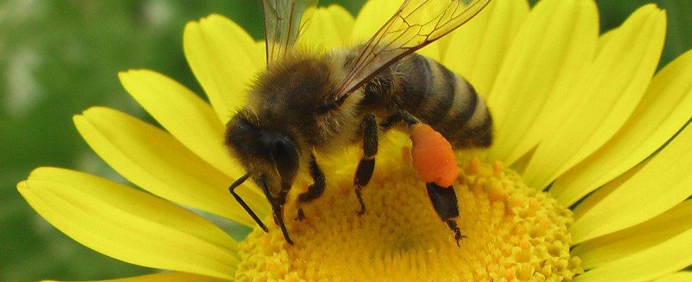 Nahrungsquelle für Insekten