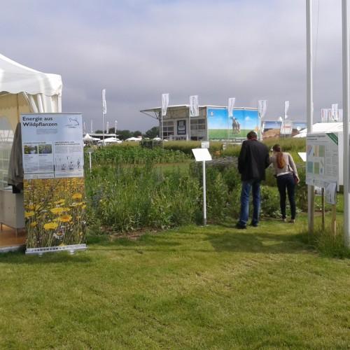 Netzwerkstand Mit Wildpflanzen