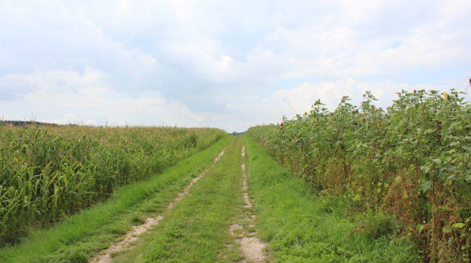 Artenvielfalt Im Agrarraum
