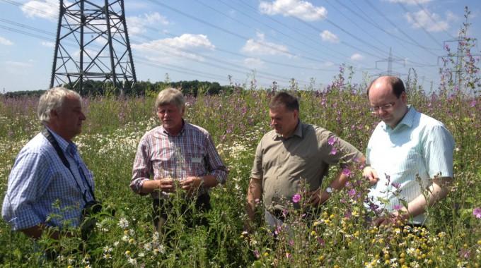 Der niedersächsische Landwirtschaftsminister besucht Wildpflanzenfläche