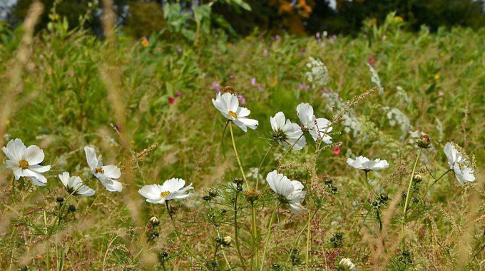 Mit Wildpflanzen Für Mehr Biodiversität