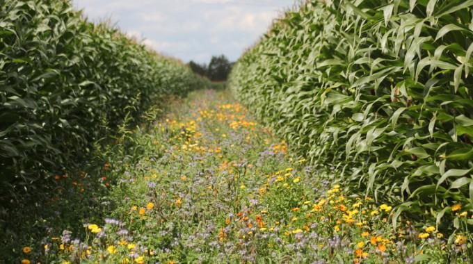 Landwirte ackern zur Förderung der Biodiversität