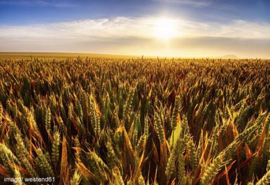 Ökologischen Intensivierung als Chance für Landwirtschaft und Artenschutz