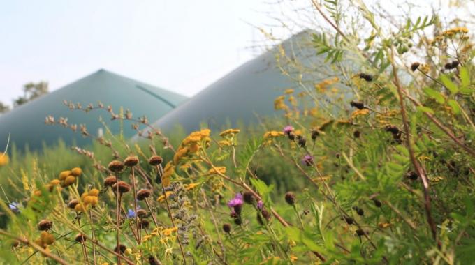 Nutzung alternative Energiepflanzen im Greening berücksichtigen!