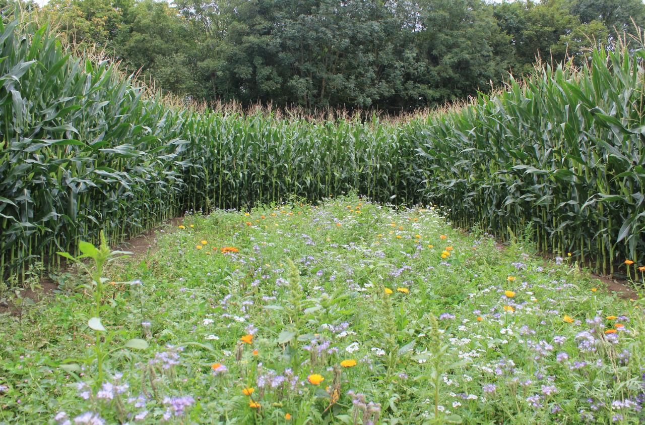 Ackern für die Artenvielfalt
