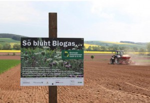 Bioenergie Wildpflanzen