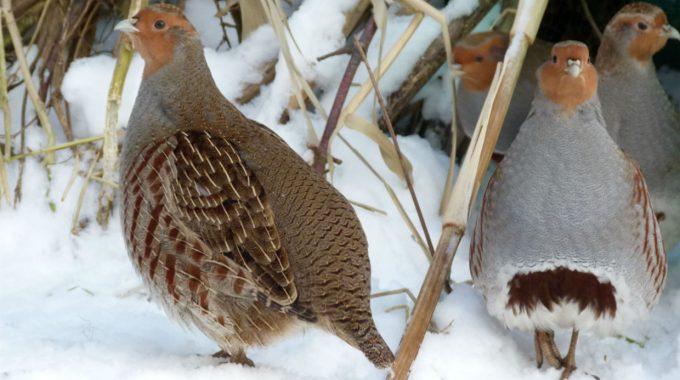 Wildpflanzen-Power Lässt Lichterketten Leuchten Und Macht Feldvögel Satt