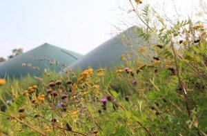 Biogas aus Wildpflanzen-Biomasse