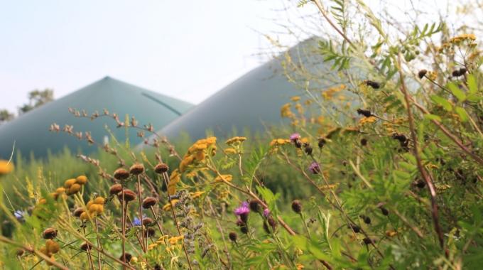 """Praktikertagung: """"Biomasse aus Wildpflanzen"""""""