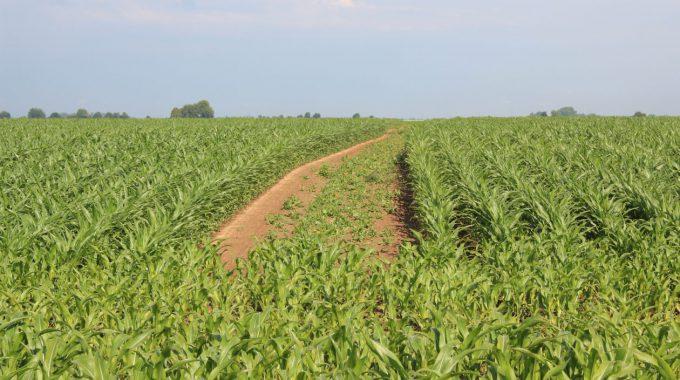 Netzwerk Lebensraum Feldflur Fordert Änderung Des GAK-Rahmenplans