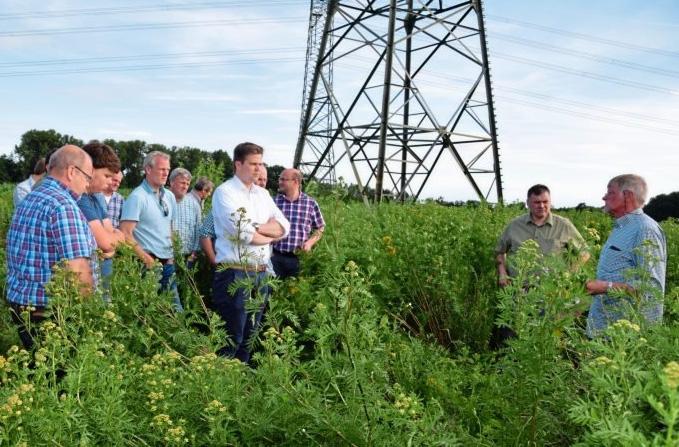 Landwirte Wollen Förderung Für Wildpflanzen-Anbau