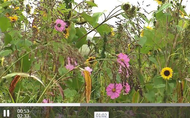 Blühpflanzen Für Umwelt Und Auge