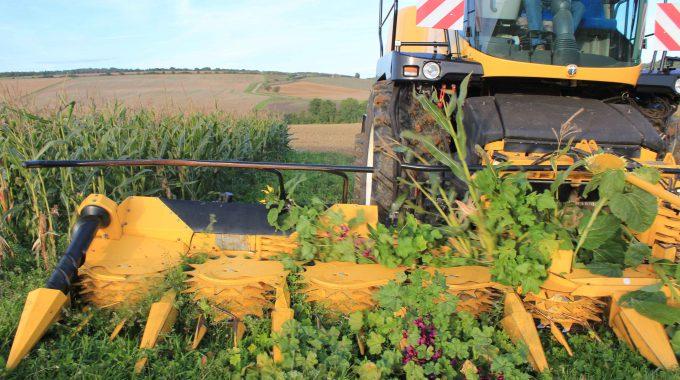 Nutzung Von Wildpflanzenflächen Zukünftig Im Rahmen Des Greenings Möglich