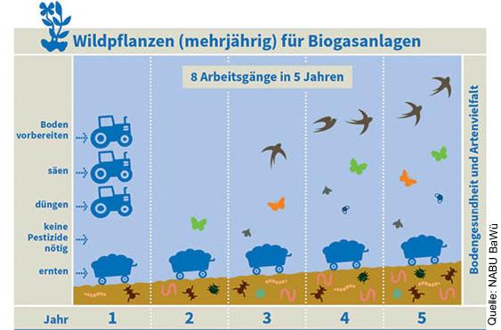 Biodiversität Für Biogasanlagen